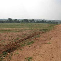 4.5 Acres Land for Agriculture