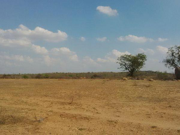 200 Acres Land for Agriculture
