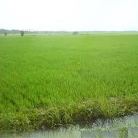22 Acres Land for Agriculture