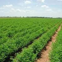 8 Acres Land for Agriculture