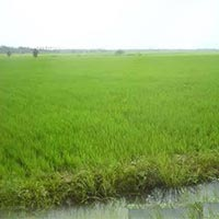 18 Acres Land for Agriculture