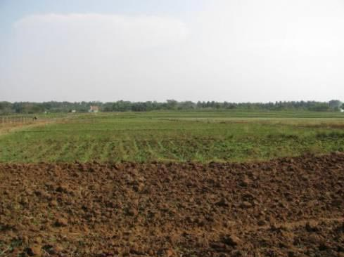 105 Bigha Land for Agriculture