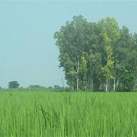 25 Acres Land for Agriculture