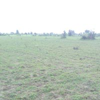 4 Acres Land for Agriculture