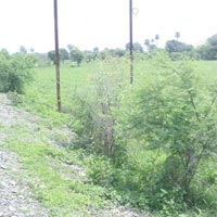 29 Acres Land for Agriculture