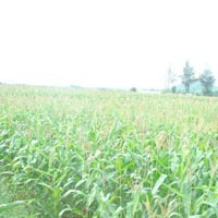 2600 Acres Land for Agriculture