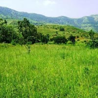 10 Acre Land for Agriculture