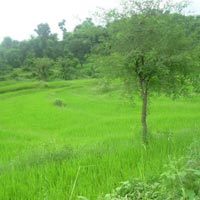 3 Acre Land for Agriculture