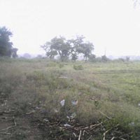 2.5  Acre Land for Agriculture