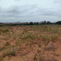 13  Acre Land for Agriculture