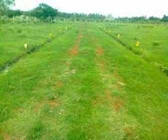 15 Acre Land for Agriculture