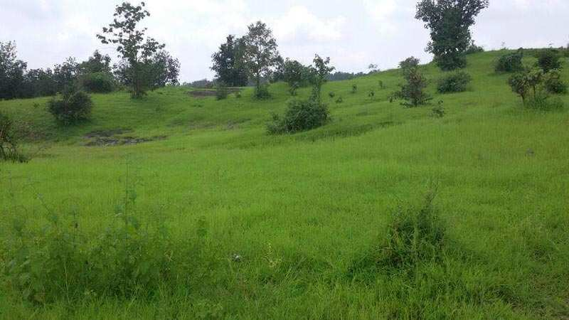 2 acre Land for agriculture