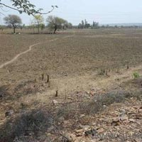 50  acres Land for agriculture