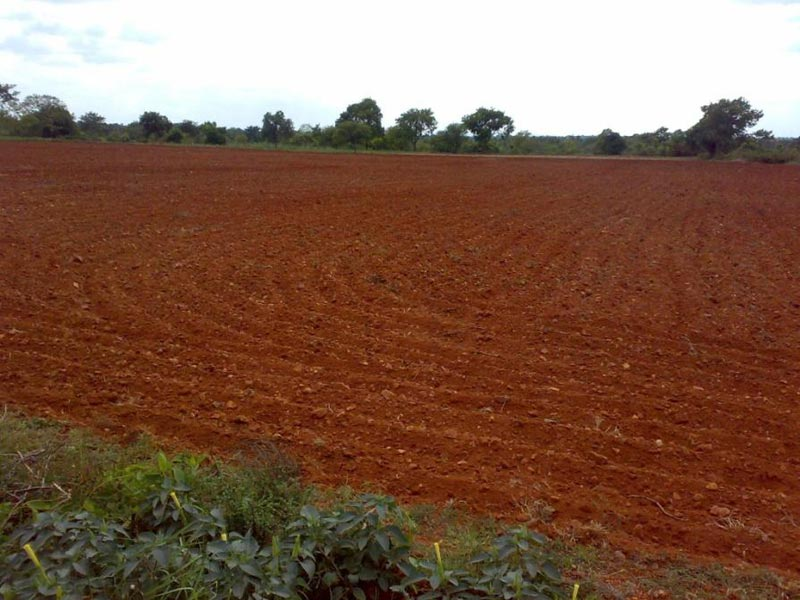 2200+  acres Land for agriculture
