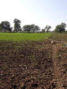 Farm Land Are Available For Sale At Damoh