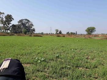 Agricultural Land For Sale At Damoh, MP