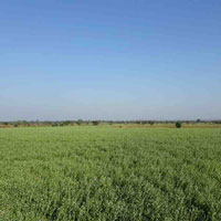 Agricultural Farm Land for Sale Madhya Pradesh