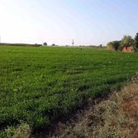 Agricultural Land for sale at Vidisha, M P