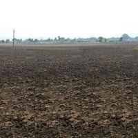 Agricultural Land for Sale in Vidisha, M P