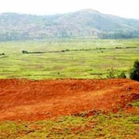 Agricultural/Farm Land for Sale in Agar Malwa