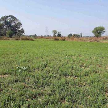Commercial Lands /Inst. Land for Sale in Jabalpur