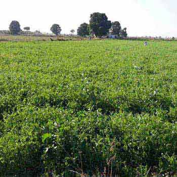 Agricultural Land for sale at Jujhar
