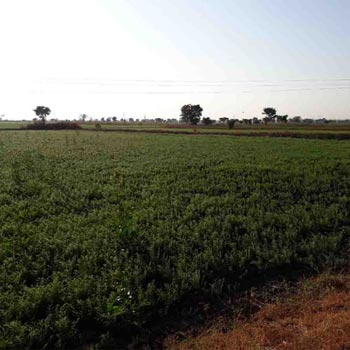Agricultural Land for sale at Lakhani