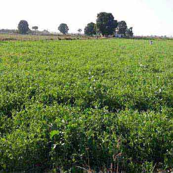 Agricultural Land for sale at Bhajia