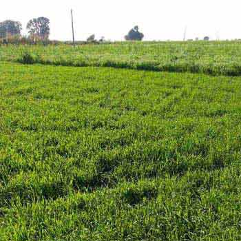 Agricultural Land For Sale In Panagar, Jabalpur