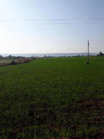 Agricultural Land For Sale In Patan, Jabalpur