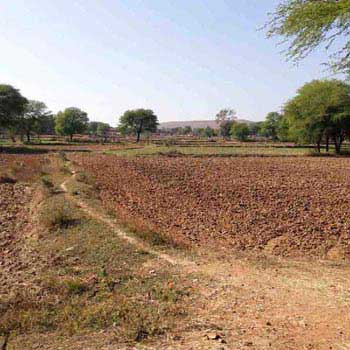 Agricultural Land For Sale In Bhatiya, Patera, Damoh
