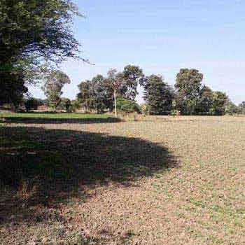 Agricultural Land For Sale In Champakhedi, Lateri, Vidisha