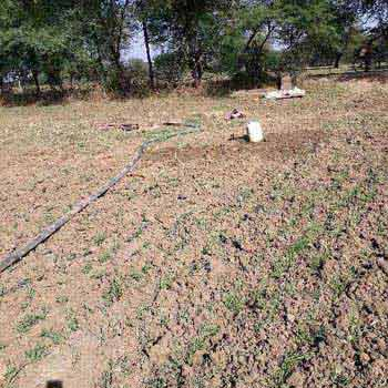 Agricultural Land For Sale In Dafaryai, Shamshahbad, Vidisha