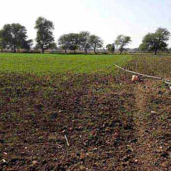 Agricultural Land For Sale In Dugani, Jabera, Damoh
