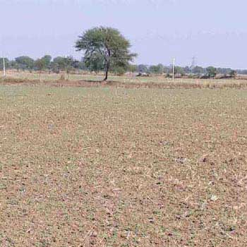 Agricultural Land For Sale In Heerapur, Shamshahbad, Vidisha