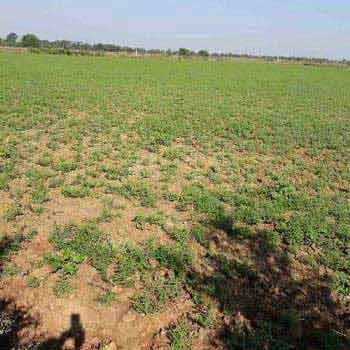 Agricultural Land For Sale In Hinoti Singourgarh, Tendukheda, Damoh