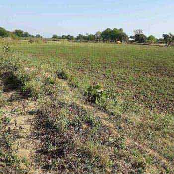 Agricultural Land For Sale In Kaleharakheda, Jabera, Damoh