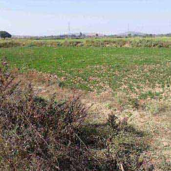 Agricultural Land For Sale In Nibhouri, Panagar, Jabalpur