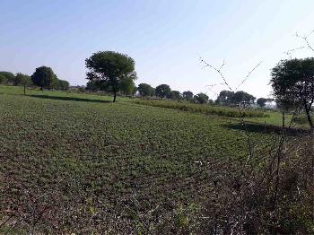 Agricultural Land For Sale In Nipaniya, Panagar, Jabalpur