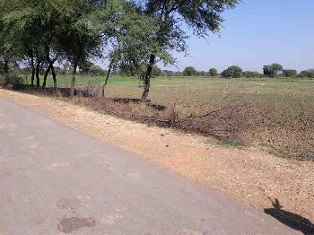 Agricultural Land For Sale In Sagra, Jabera, Damoh