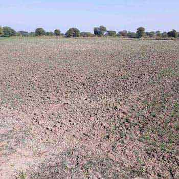 Agricultural Land For Sale In Tejgarh, Tendukheda, Damoh