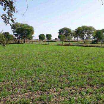 Agricultural Land For Sale In Umariya, Panagar, Jabalpur