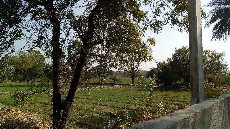 Agricultural/Farm Land for Sale in Bhatewar, Udaipur