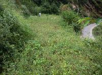 Residential Plot for Sale in Mukteshwar, Nainital