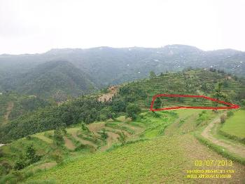 Agriculture Land For Sale In Mukteshwar