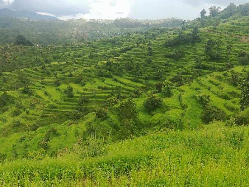 Agricultural/Farm Land for Sale in Mukteshwar, Nainital