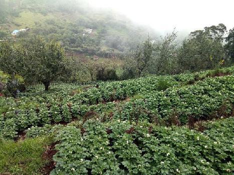 23108 Sq.ft. Agricultural/Farm Land for Sale in Kodaikanal