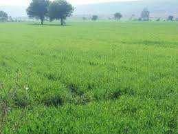 Industrial land for sell