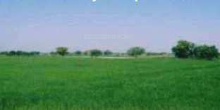 Farm land available for sell in Murthal