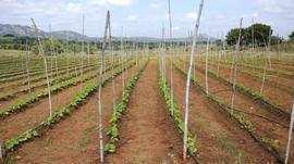 Agricultural/Farm Land for Sale in Doddaballapur, Bangalore North